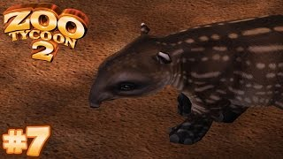 TAPIR TWOSOME | Zoo Tycoon 2 - Let