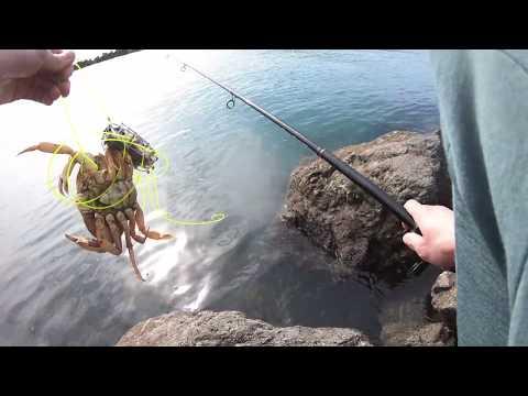 CRAB SNARING With CUSTOM SNARES @ Bodega Bay