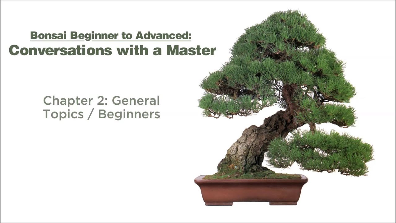 Bonsai Conversations With A Master   Chapters 1 U0026 2. Dallas Bonsai Garden