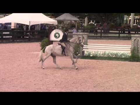Equitation Horse - WEF 2016