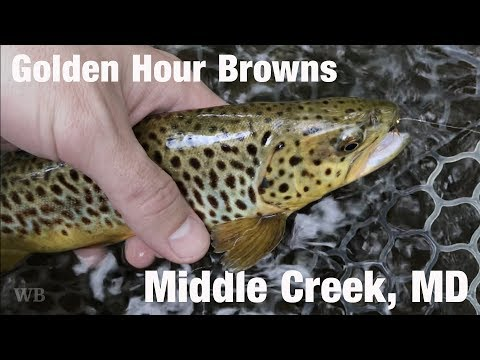 WB - Fly Fishing Golden Hour Browns, Middle Creek, MD - May '18