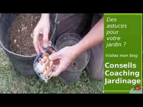 semis de noyaux avec stratification - youtube