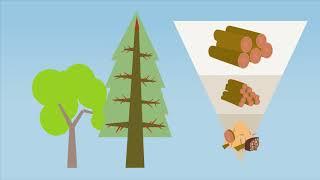 Drewno - klucz do zrównoważonego rozwoju