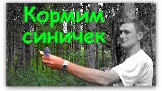Кормим Птичек - Синичек с Рук в Лесу в Крыму