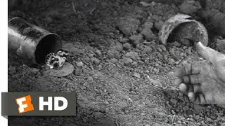 The Butterfly - All Quiet On The Western Front (10/10) Movie CLIP (1930) HD