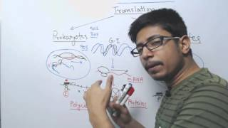 Difference between Prokaryotic and Eukaryotic Translation