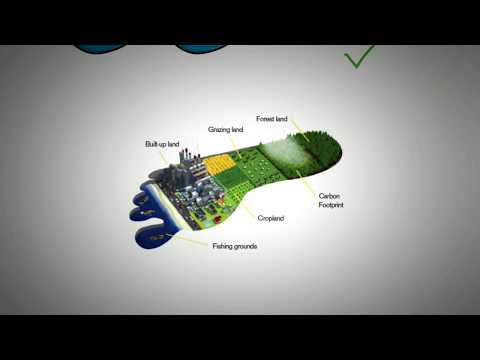 Ecological Footprint and Carbon Footprint Explained