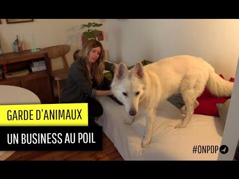 Garde D'animaux : Un Business Au Poil