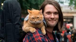 Что почитать: увлекательные книги про кошек для тех, кто сидит дома.