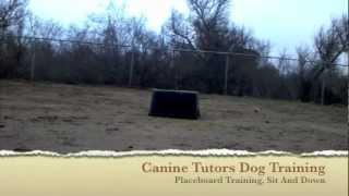 "Puppy Training San Jose,ca. How To Teach ""sit"""