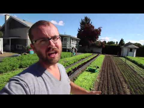 CROP FOCUS: High yields from arugula - Hi-Rotation planting