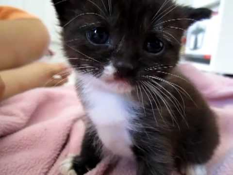 Cute kittens meowing ♥ GUARANTEED TO MAKE YOUR DOG OR CAT LOOK ♥