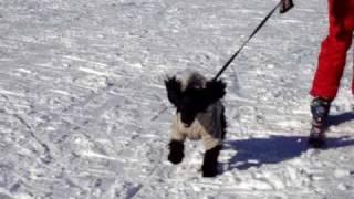 Dogbook Movie: Snow time  December 2008