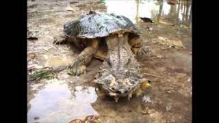 Unbekannte Kreaturen: Schaurige Wesen unseres Planeten