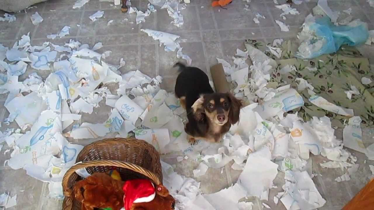 Toilet Paper With Dog