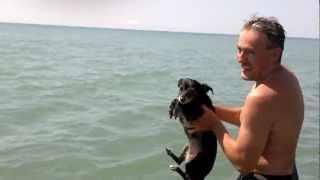 Летающая собака-пловец.mp4