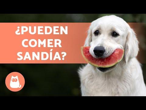 ¿Los Perros Pueden Comer SANDÍA? - ¡Te lo explicamos!