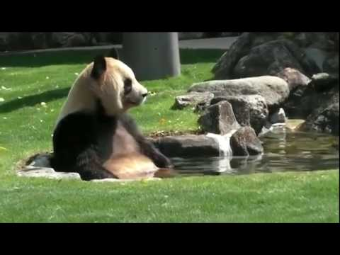 Weird Facts You Didn't Know About Pandas