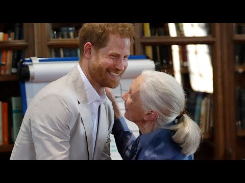 Prince Harry's Heartwarming Moment With Dr. Jane Goodall Is The Best Thing You'll See All Day!
