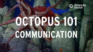 Octopus 101 | Communication!