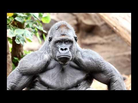 Giant bondo ape