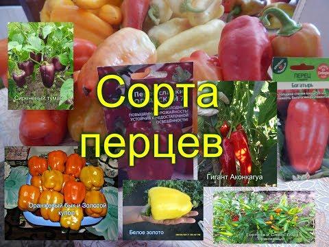 СОРТА ПЕРЦЕВ (фото)