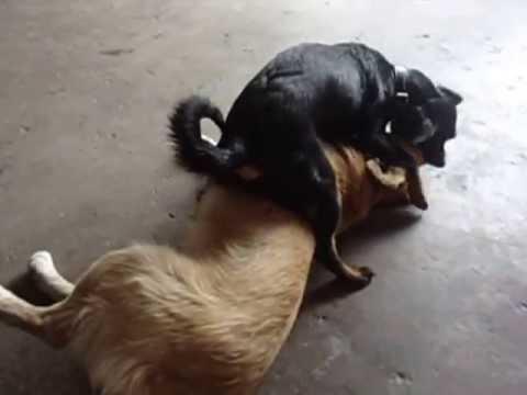 Videos de animales asiendo el amor
