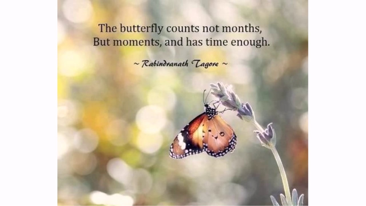Butterfly Quotes butterfly quotes   YouTube Butterfly Quotes