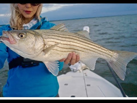 TOPWATER STRIPED BASS (Striper) FISHING In New Jersey