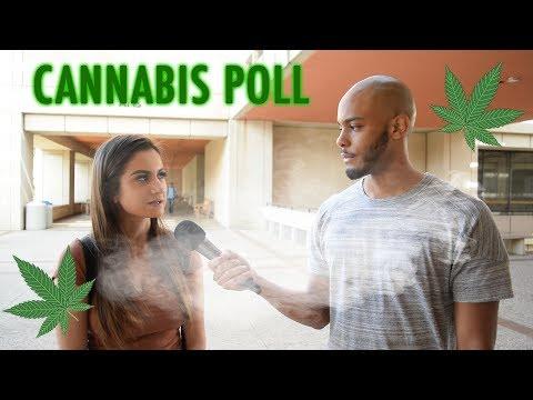 Cannabis- Paisano Polls