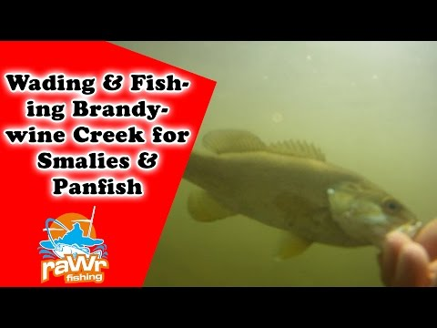 Fishing for Smallmouth bass & Sunfish - Wading Brandywine Creek DE