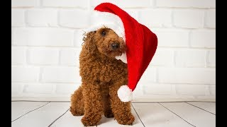 ШАПКА для СОБАКИ на спицах Crochet Dog Hats своими руками Knitted cap for the dog