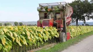 Repeat youtube video Spapperi S.r.l. - Raccoglitrice Tabacco RA 632 / Tobacco Harvester RA 632