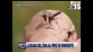Llegada del Zika al Perú es inminente