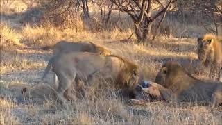 Дикий мир животных Африки 2018