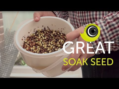 How To Make Great Soak Seed For Birds | The Canary Room Top Tips