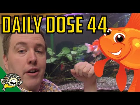 Treating The Sick Fish Again! Getting Our Groove On. Daily Dose 44.