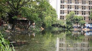 Ponds of Kolkata