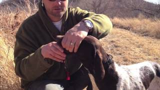 Hunting Dog Training - Reinforcing Retrieve And Hold