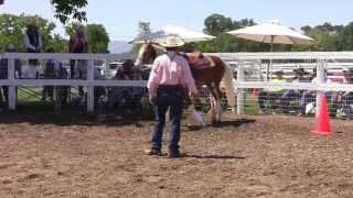 cowboy Dressage at Light Hands Horsemanship part 4