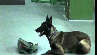 Obedience Dog Training - Best Dog Ever Now Is Usa!