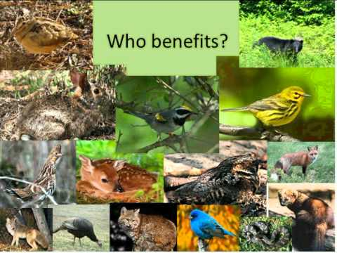 Golden-Winged Warbler Ecology and Guidelines for Creating Breeding Habitat