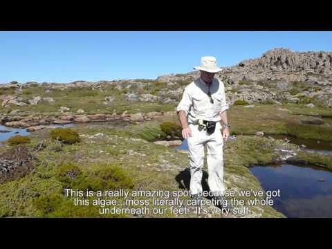 Mt Field National Park - Tasmania 1080p