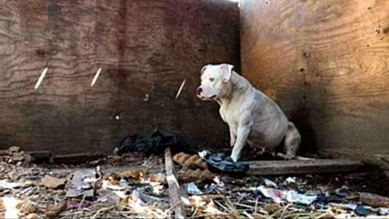 Она 5 лет была прикована за лапу. Когда силы кончились, собака решилась на отчаянный поступок