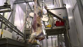 Halal Ternera,  Halal Beef