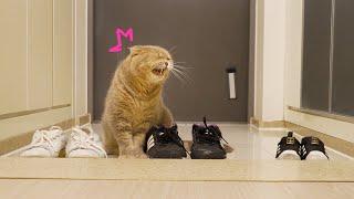 Чью обувь предпочтут кошки?
