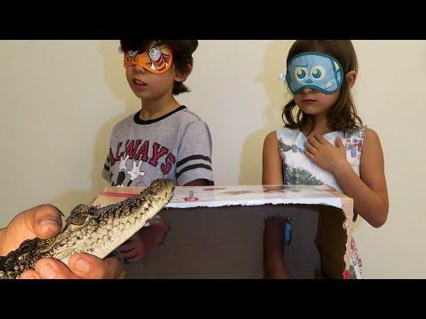 ايش الي في الصندوق؟ جبت لهم تمساح 🐊