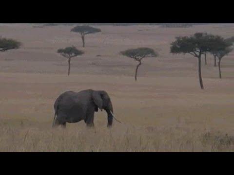 Pt 1 Safari Live's Sunrise Safari Drive at 6:30 AM on July 25, 2017