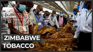 Zimbabwe tobacco: Biggest foreign currency earner hit by COVID-19