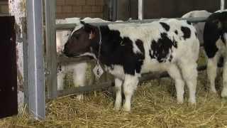 Mamylac Témoignage d'un éleveur à Sint-Niklaas - NL